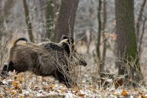 Confagricoltura chiede alla Regione di riaprire la caccia