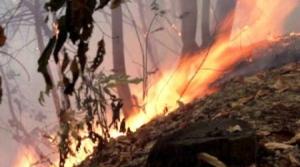 Polveri sottili: vietati i falò per la pulizia dei boschi