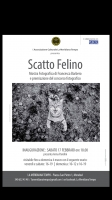 A Mondovì la mostra fotografica 'Scatto felino'