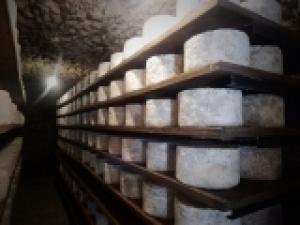Caraglio: corso per assaggiatori di formaggio