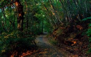 Alla Granda oltre 774 mila euro per le piste di accesso ai boschi