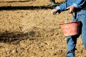 La semina diretta dei cereali in un incontro con Confagricoltura