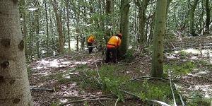 Dopo sette anni la Regione torna ad assumere operai forestali