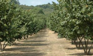 Emissioni di ammoniaca in agricoltura: come contenerle