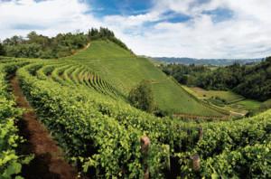 La viticoltura sostenibile protagonista a 'Vinitaly' con Coldiretti Cuneo