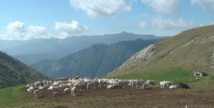 Pubblicato il bando regionale per il sostegno alle aziende agricole montane