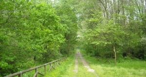 Dalla regione nuovi contributi per 'ripopolare' i boschi