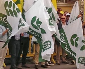 Confagricoltura è con Asnacodi nella protesta sui ritardi dei rimborsi assicurativi