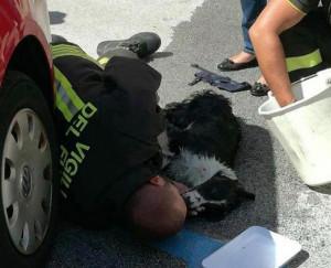 Tre cani lasciati in auto al sole, uno muore. La Lega Italiana Difesa Animali: 'E' reato'