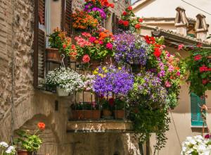 Iscrizioni entro il 30 giugno per il concorso 'Da vite in fiore'