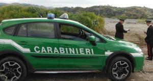 Traffico illegale di cani dall'Ungheria: coinvolti un veterinario e tre allevatori cuneesi