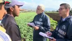 Azienda agricola di Peveragno impiega 17 lavoratori in nero: multa di oltre 50 mila euro