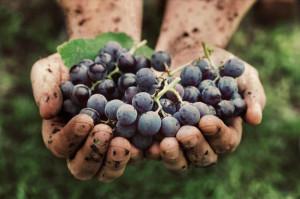 La raccolta di documenti sui 'Paesaggi vitivinicoli' è stata prolungata fino a ottobre