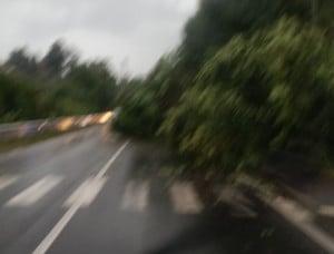 Albero sulla carreggiata: disagi al traffico in strada degli Orti a Bra