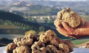 Si apre la stagione dei tartufi: circa 2 mila i tesserini rilasciati dalla Provincia