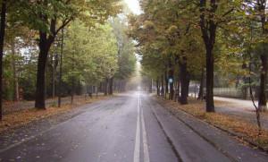 Al via i lavori per l'installazione di cinque passaggi pedonali in viale Angeli