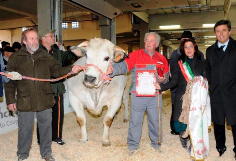 Dall'Aidaa un esposto alla Procura di Cuneo contro la Fiera del Bue Grasso di Carrù