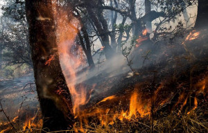 Non piove, non nevica: torna il pericolo degli incendi boschivi