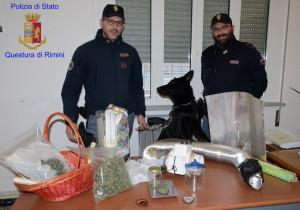 Coltiva marijuana nel suo appartamento, cinquantaquattrenne cuneese arrestato a Rimini