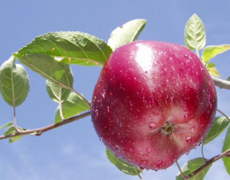 Dalla Regione Piemonte 11,4 milioni di euro per la valorizzazione dei prodotti agroalimentari di qualità