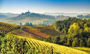 Vola l'export dei vini di Langhe e Roero