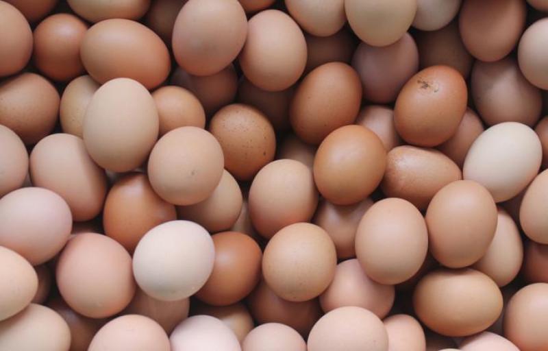 'Più tracciabilità e trasparenza con la marchiatura delle uova in allevamento'