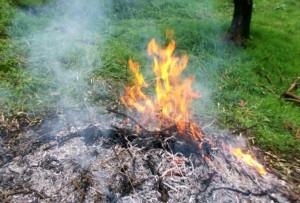 Rifreddo chiede deroghe al divieto di bruciatura degli scarti vegetali