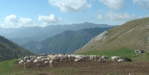 Coldiretti Cuneo: 'A rischio quasi 5 milioni di euro per le imprese agricole cuneesi di montagna'