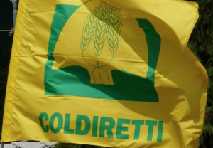 Coldiretti Cuneo, svolta bio in vigna: tra Langhe e Roero la viticoltura cresce nel segno del 'green'