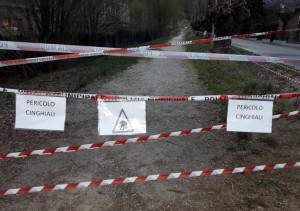 Cinghialessa abbattuta nell'area verde di San Cassiano ad Alba, Comune e Atc: 'Noi non responsabili dell'accaduto'