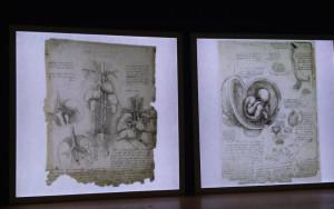 Bra, a Palazzo Mathis una mostra su Leonardo Da Vinci