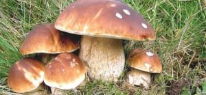 Un corso per la vendita di funghi freschi con l'Asl CN1