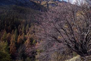 Finanziato dalla Regione Piemonte il Progetto 'Valle Varaita Forest'