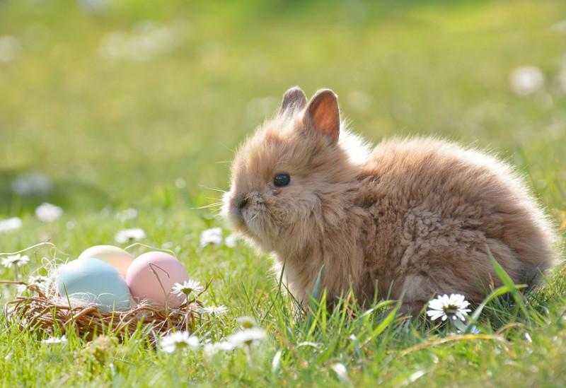 Auguri di buona Pasqua e Pasquetta a tutti i lettori di Cuneodice.it