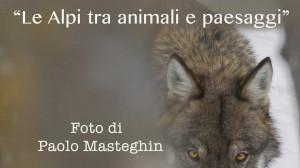 La mostra fotografica 'Le Alpi tra animali e paesaggi' al Castello degli Acaja di Fossano