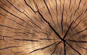 Confindustria Cuneo: 'Agli Stati Generali del legno protagoniste le imprese della filiera'