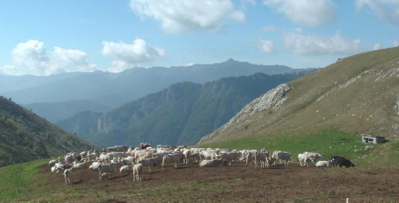 L'appello di Confindustria Cuneo e Uncem: 'Urgente un'Agenda europea per la montagna'