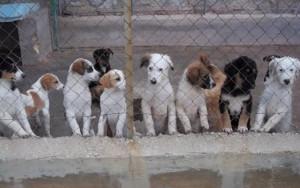 Al Piemonte un finanziamento di 98 mila euro per individuare canili e gattili irregolari
