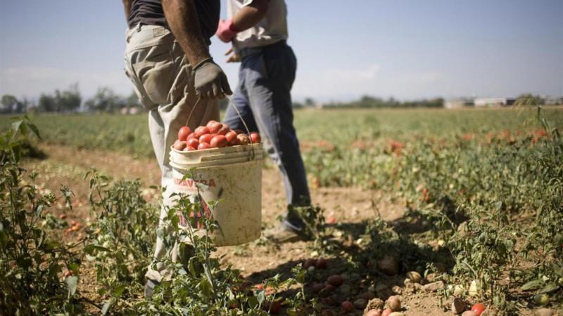 Saluzzo Migrante: 'Serve impegno per la promozione del lavoro regolare in agricoltura'