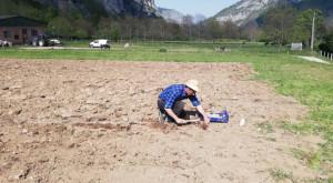 In valle Gesso è nato il consorzio della patata di montagna 'I balin dal Re'