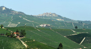 Viola il disciplinare del Barolo, viticoltore condannato a 6 mesi di reclusione
