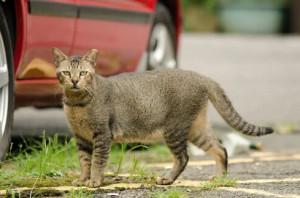 A Borgo San Dalmazzo è vietato dare da mangiare ai gatti randagi