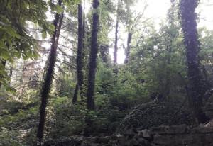 Una fortezza sepolta nel bosco: a Borgo San Dalmazzo i resti del castello che ospitò Federico Barbarossa