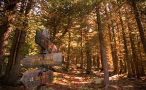 Nel bosco dell'Alevè corso di formazione per Accompagnatori Naturalistici