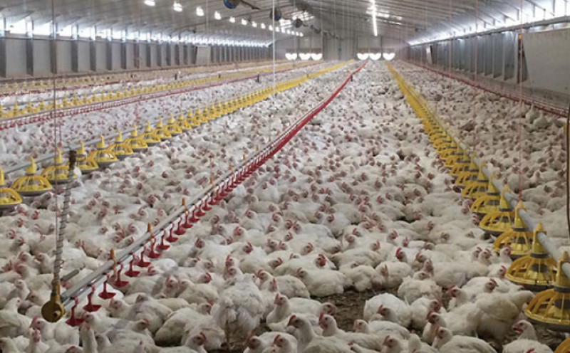 Nuove norme per la biosicurezza in avicoltura, possibili aperture del Ministero