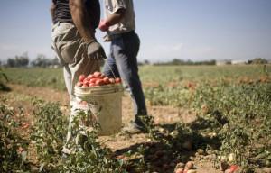 Coldiretti Piemonte, Agromafie: 'Urgente aggiornare la normativa'