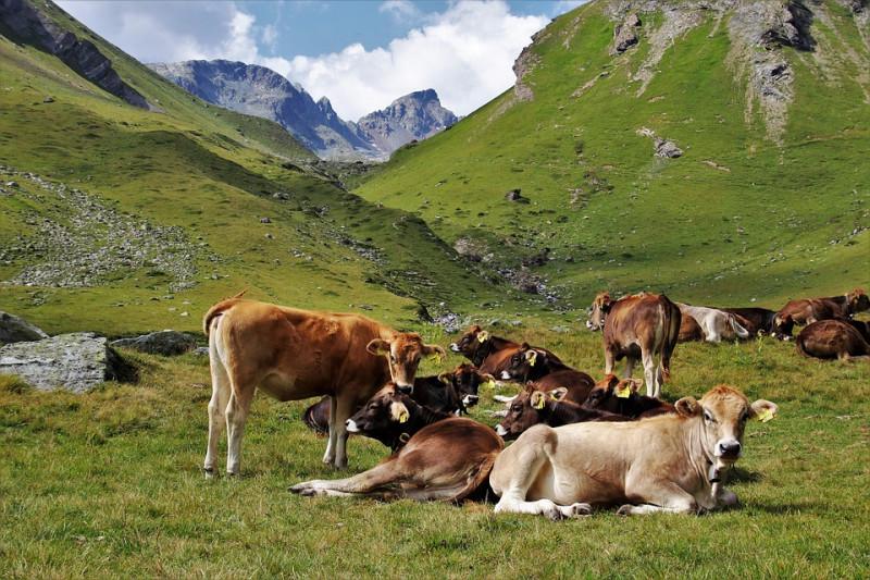 Pascoli 'fantasma', cinque allevatori alla sbarra per i contributi europei