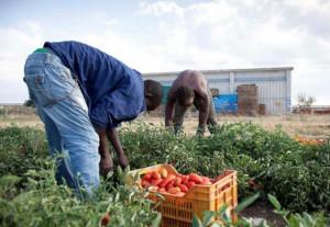 Nasce a Saluzzo lo sportello di collocamento pubblico in agricoltura