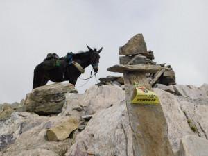 Silvano Degiovanni e la sua mula Pioggia conquistano la vetta del monte Maniglia