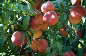 Prezzi della frutta, vince la linea di Coldiretti: al via un nuovo sistema di rilevazione